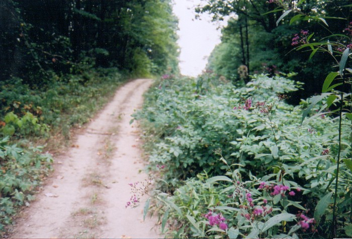Photograph of ATV Trail